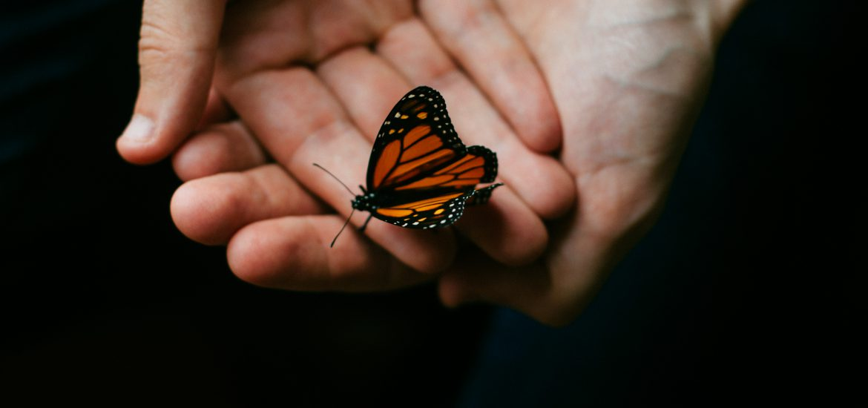 lupus butterfly rash symptom