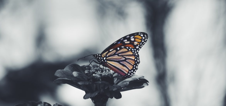 butterfly-lupus-orange-poll-rash-malar