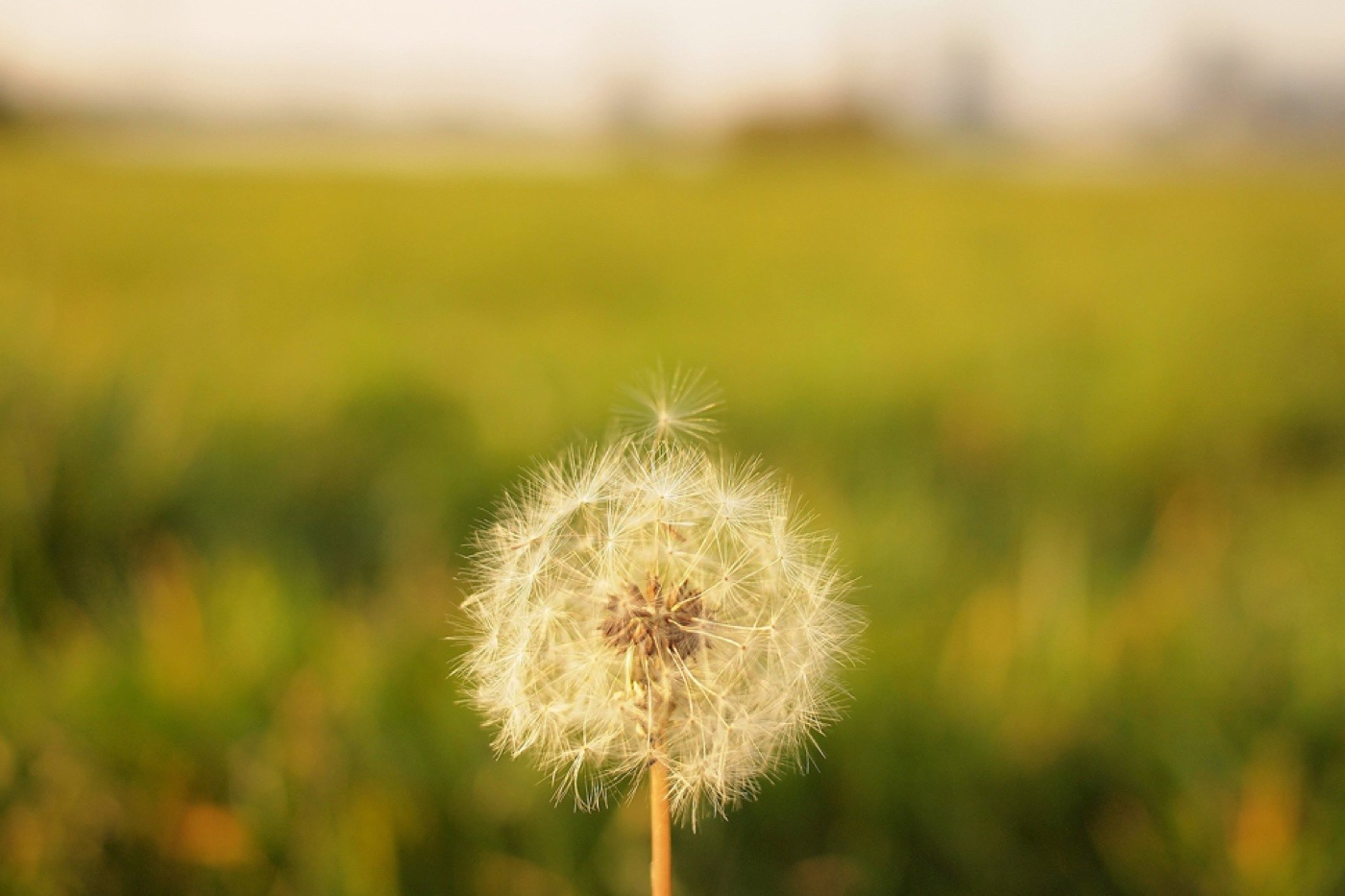 weeds-lupus-allergies-fix