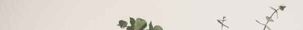 aromatherapy-lupus-corner-essential-oil-divider1