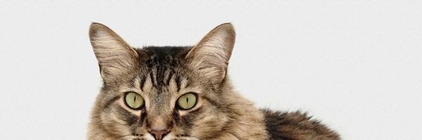 pets-cat-divider5