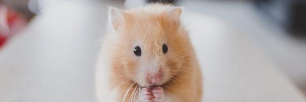 pets-hamster-divider3
